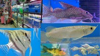 Kurla Fish Shop