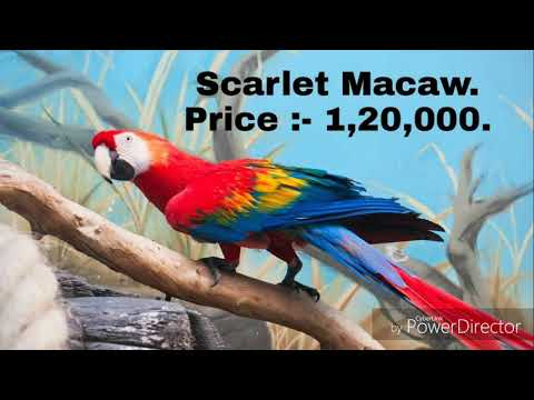 Types Of Parrots And Their Price In India Youtube