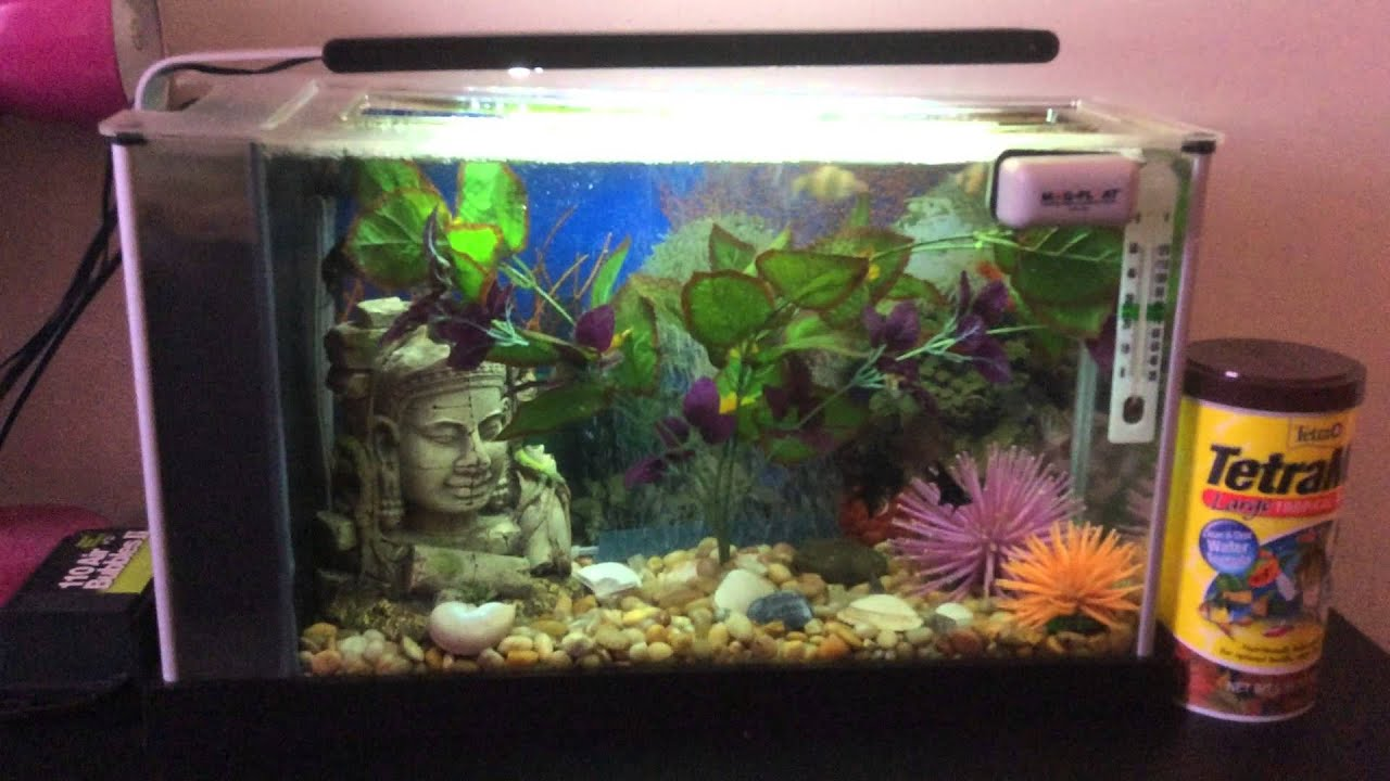 Aquarium fish 5 gallon tank - My Fluval Spec 5 Gallon Fresh Water Aquarium
