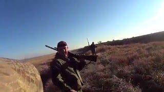 Охота на фазана и куропатку с Курцхааром