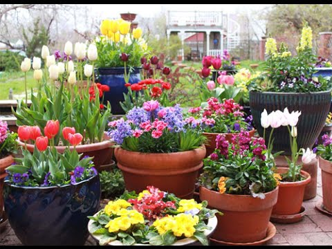 5 Spring Gardening Tips Youtube