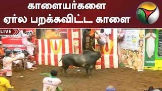 காளையர்களை ஏர்ல பறக்கவிட்ட காளை | Jallikattu | Alanganallur