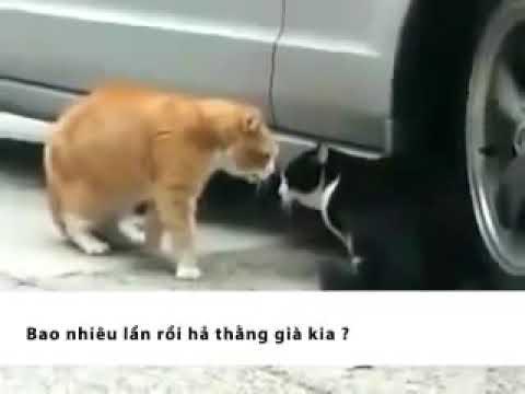 2 con mèo tâm sự
