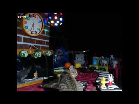Cats Meok Bang : Stray Cats in South Korea[팝콘티비 BJ도둑고양이 나비월드] 160917 복길이 오전5시반