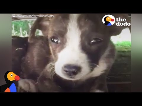 SCARED Puppy Found Alone Has SO MANY Friends Now | The Dodo