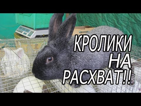 Ярмарка в Курске. осень 2019. птица, кролики.