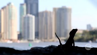 Australia's biodiversity: cities and towns