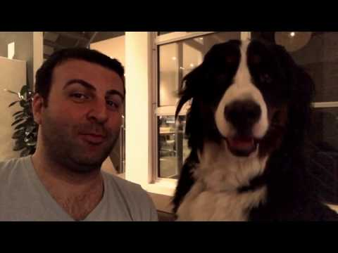 """Opera singer DAVID SERERO sings for funny DOG PARTNER """"Fly Me To The Moon"""""""