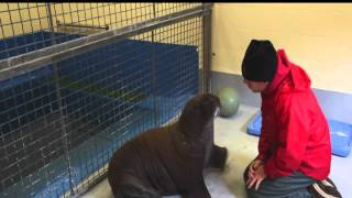 Eat Sleep and Snuggle, Welcome Baby Walrus!