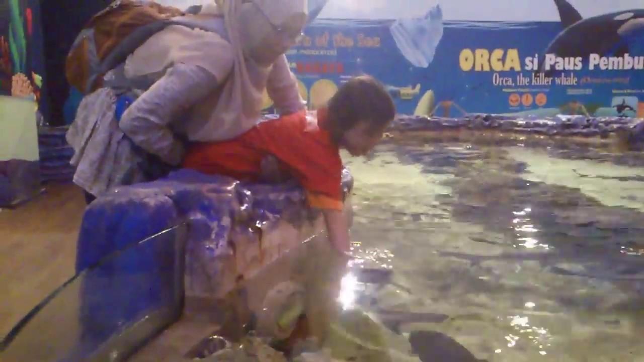 Ada Ikan Hiu Di Tsm Bandung Youtube