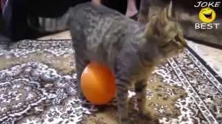 Приколы с Котами лучшее за 2013 год