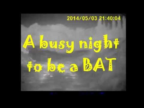 A busy night to be a Bat