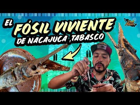 Sobre la Carretera comimos EL FOSIL VIVIENTE de Nacajuca, TABASCO