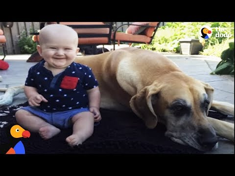Big Dog Is Excited About His Baby Brother | The Dodo
