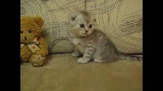 фото и видео котят в основном Лизины и две девочки Ми 049