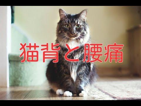 【腰痛 姿勢】腰痛と猫背の関係