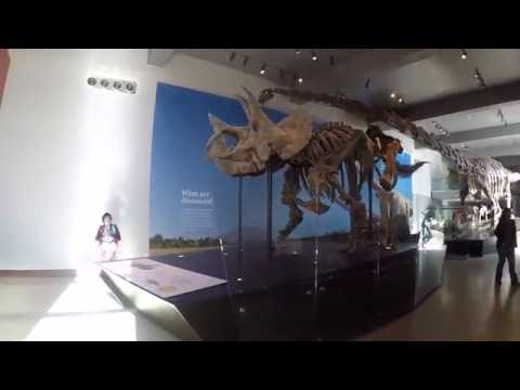 Oliver Ariel López Conde - Natural History Museum of Los Angeles County Part 2