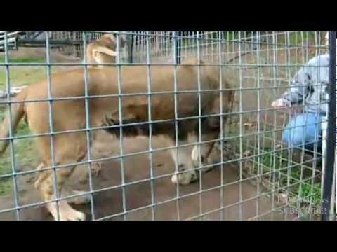 Lion kills female intern at California animal sanctuary