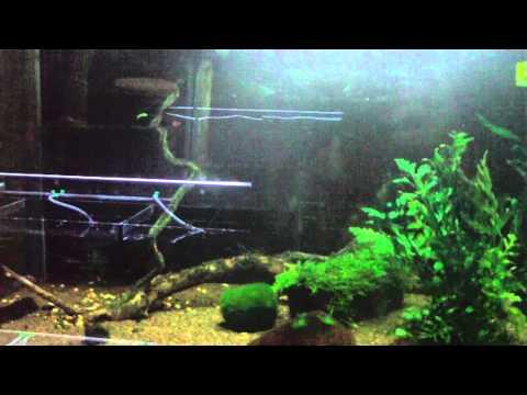 Decoration Aquarium Thailande