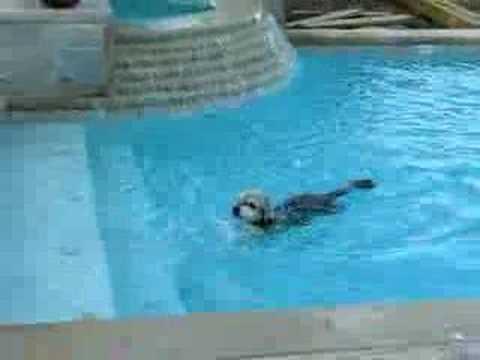 Maskie Swimming