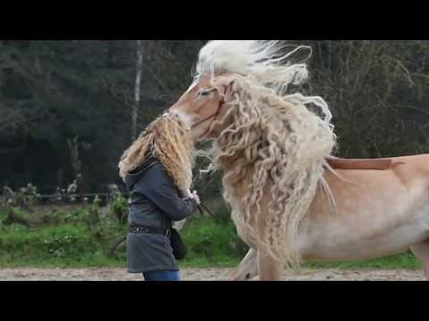 Horse's Mane With Long Blonde Curls Matches Her Owner's Hair