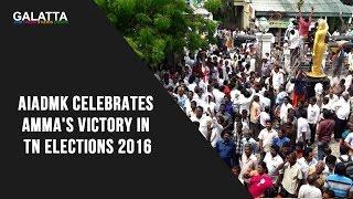 AIADMK Celebrates Amma's Victory In TN Elections 2016