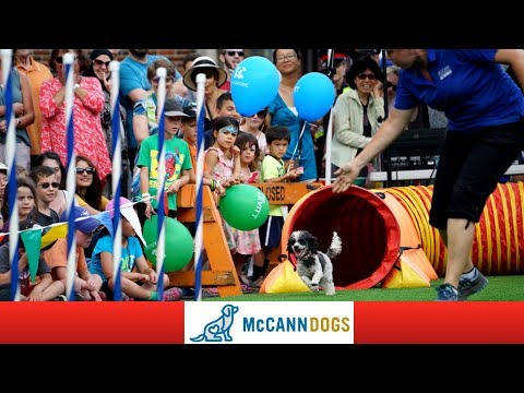 Behind The Scenes With McCann Dog Stars At Dundas Cactus Festival /Dog Vlogs Episode 27/