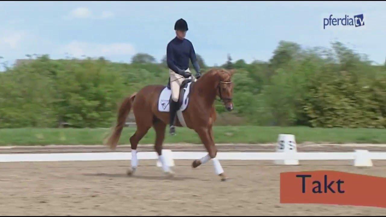 Takt Und Losgelassenheit Bei Jungen Pferden Erarbeiten Ingrid