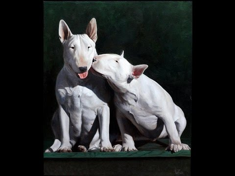Bull Terrier Puppy Timeline From 5 Weeks To 6 Months Male And Femlale Max & Lady Stock Music