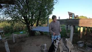 Один из способов как отучить собаку прыгать на людей, прохожих, и покусывать руки во время игры.