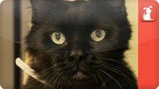 Unadoptables - healthy, affectionate, loving cat needs rescue