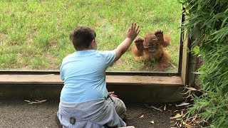 Making Friends with a Baby Orangutan - Amneville, France