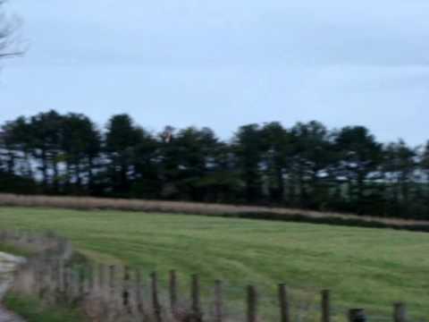 Short-eared Owl Near Chanctonbury Ring