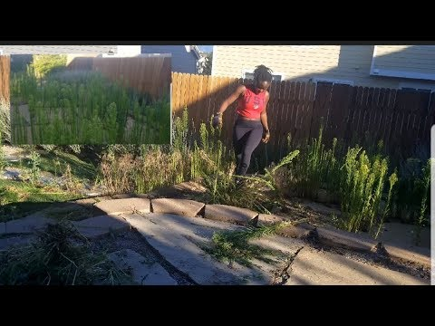 A $1000 backyard Makeover - YouTube