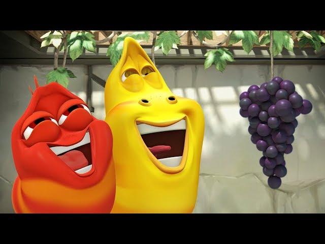 LARVA - THE GRAPE ESCAPE | Cartoon Movie | Cartoons For Children | Larva Cartoon | LARVA Official