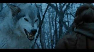 Волки атаковали девушку