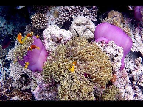 Maldive - The Movie [ Maldives - Ari North - Maayafushi House Reef Snorkeling ]