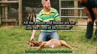 Preuves que le rituel Halal est un Miracle ! 2/3 - VOSTFR - HD