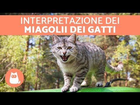 11 VERSI dei gatti: SIGNIFICATO e cosa ti vuole dire