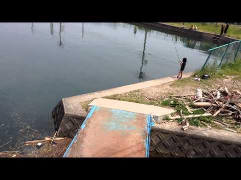 琵琶湖 堀切新港の流れ込み堀切橋 ブラックバス釣りポイント ハイプレッシャー