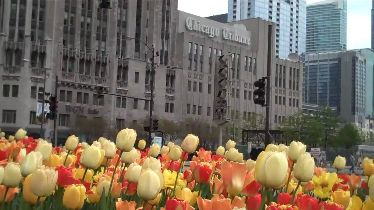 Spring Flowers On Michigan Avenue Youtube