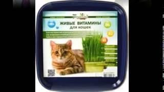 витамины для кошек бреверс инструкция