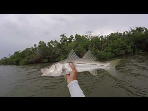 10,000 Islands Snook Flounder Trout Fishing