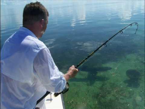 Florida keys shark fishing adventures with capt chris for Florida shark fishing charters