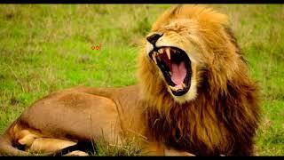 Creo-Carnivores|1 Hour Loop(Digital Descent)