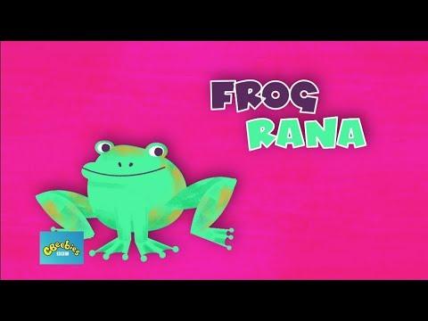 English Es Ingles Frog Es Rana Youtube