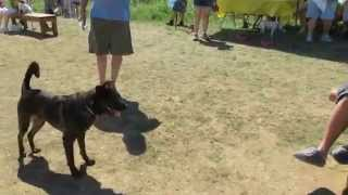 Sit Means Sit Dog Training Columbus Ohio| Socializing Your Dog