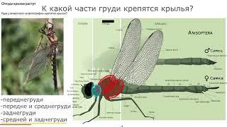 Разбор заданий олимпиады по биологии. муниципальный этап, 2020, ботаника, зоология, 7, 8, 9, 10, 11