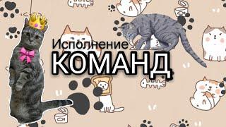ОБУЧЕНИЕ КОМАНДАМ/ Как научить кошку/собаку командам?