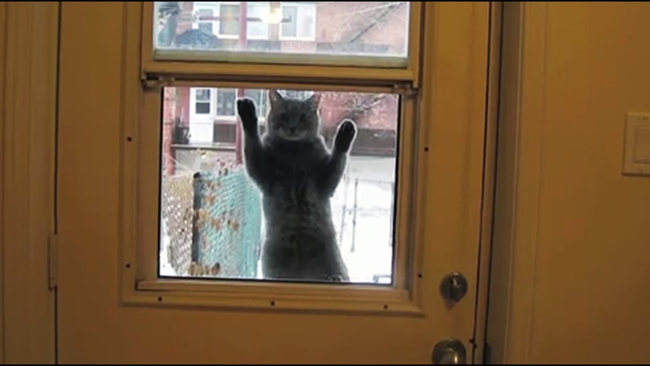 Cats Who Desperately Want To Come Inside Compilation